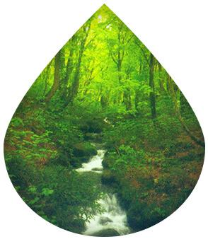 大自然がたっぷり詰まった自然本来の水